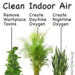 Plants Can Purify Your Indoor Air