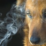 Negative Effects of Second-Hand Smoke on Pets